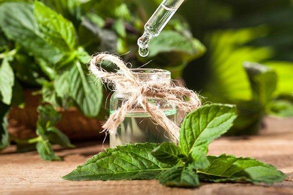 V rostlinách se skrývá velká léčivá síla - přírodní kosmetika Nobilis Tilia