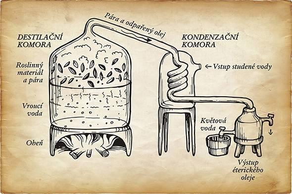 destilace éterického oleje - přírodní kosmetika Nobilis Tilia