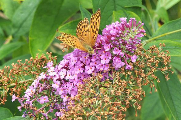 Vlčihorská zahrada - přírodní kosmetika Nobilis Tilia