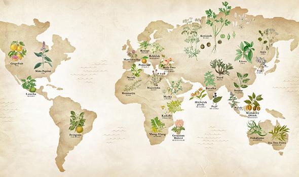 Mapa éterických olejů - přírodní kosmetika Nobilis Tilia